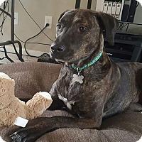 Adopt A Pet :: Kennedy - Aurora, OH