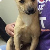 Adopt A Pet :: Logan - Centerville, GA