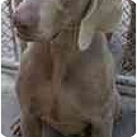 Adopt A Pet :: Carter  **ADOPTED** - Eustis, FL