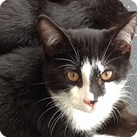 Adopt A Pet :: Jinx - Acme, PA