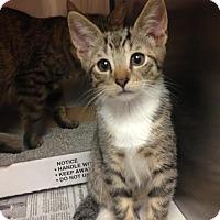 Adopt A Pet :: Prince - East Brunswick, NJ