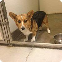 Adopt A Pet :: Luci - Lomita, CA
