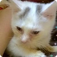 Adopt A Pet :: Leon - Hudson, NY