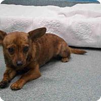 Adopt A Pet :: *FREDO - Upper Marlboro, MD