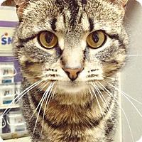 Adopt A Pet :: Dora *Price reduced to $25* - Malta, OH