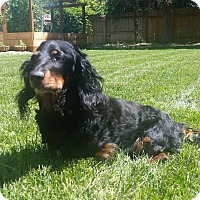 Adopt A Pet :: Bailey - Boise, ID