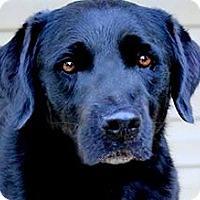 Adopt A Pet :: JAX(WOW!! ONE GORGEOUS FELLOW! - Wakefield, RI