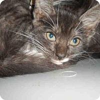 Adopt A Pet :: SKY - West Palm Beach, FL