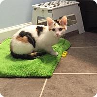 Adopt A Pet :: Penny - Covington, KY