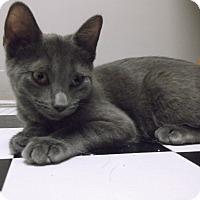 Adopt A Pet :: Flash - Farmington Hills, MI