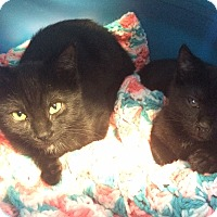 Adopt A Pet :: Kenobi and Skywalker - Greensburg, PA