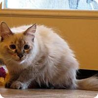 Adopt A Pet :: Diva - Chandler, AZ