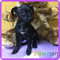 Adopt A Pet :: Newman - Hollywood, FL