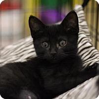 Adopt A Pet :: Claire - Sacramento, CA