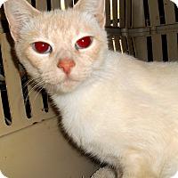 Adopt A Pet :: Cremora - Chattanooga, TN