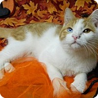 Adopt A Pet :: Freddie - Columbus, NE