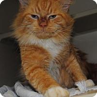 Adopt A Pet :: William - Ridgeland, SC