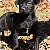 Adopt A Pet :: Shellie - Glastonbury, CT