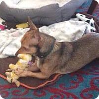 Adopt A Pet :: Diego - Wellington, FL