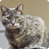 Adopt A Pet :: Sophia - Grants Pass, OR