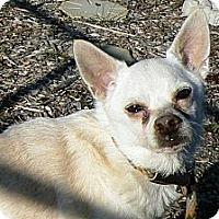 Adopt A Pet :: Roscoe - Ridgely, MD