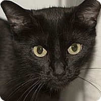 Adopt A Pet :: Patty Cake - Lombard, IL