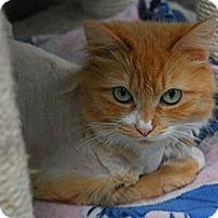 Adopt A Pet :: Emma - Lunenburg, MA