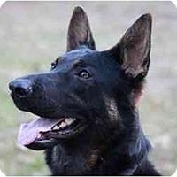Adopt A Pet :: Maris - Conyers, GA