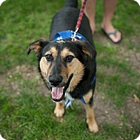 Adopt A Pet :: Franny - Saskatoon, SK