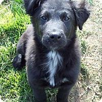 Adopt A Pet :: Luke - Waller, TX