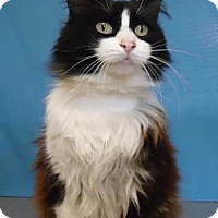 Adopt A Pet :: Scribbles - Larned, KS