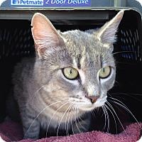 Adopt A Pet :: Ellie - Irvine, CA