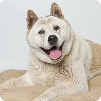 Adopt A Pet :: Lulu - Hayward, CA