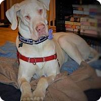 Adopt A Pet :: Skye - Lakewood, CO