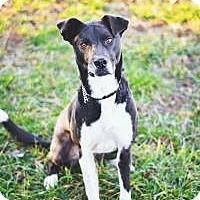 Adopt A Pet :: Natalie - Peachtree City, GA