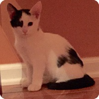 Adopt A Pet :: Patch - Turnersville, NJ