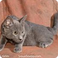 Domestic Shorthair Cat for adoption in New Orleans, Louisiana - Jack