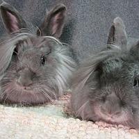 Adopt A Pet :: Jaye & Skye - Newport, DE