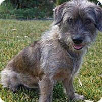 Adopt A Pet :: 'SHANE' - Agoura Hills, CA