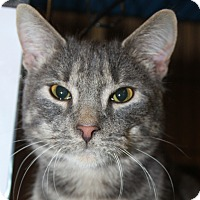Adopt A Pet :: Andy - North Branford, CT
