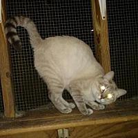 Adopt A Pet :: Adell - Land O Lakes, FL