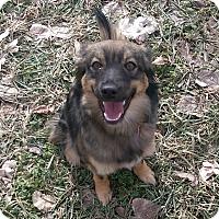 Adopt A Pet :: Jazmin - Ogden, UT