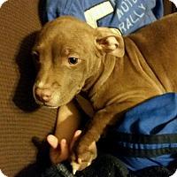 Adopt A Pet :: Babs - Buffalo, NY