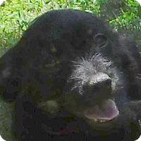 Adopt A Pet :: Ellie - MINNEAPOLIS, KS