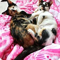 Adopt A Pet :: Stella & Ella - Snellville, GA