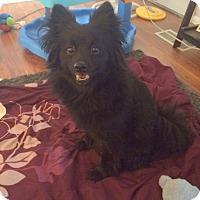 Adopt A Pet :: Onyx - Logan, UT