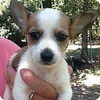 Adopt A Pet :: Winston - Boston, MA