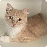 Adopt A Pet :: Brie - San Leon, TX