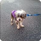 Adopt A Pet :: Skye