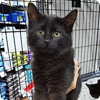 Adopt A Pet :: Ebony - Toronto, ON